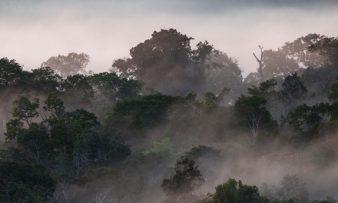 Paisagens Sustentáveis da Amazônia: RDS do Uatumã