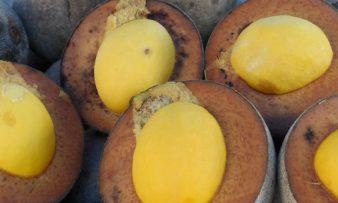 Pequiá fruto pesquisado pelo BFN-Biodiversidade e Nutrição