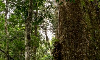 PE dos Três Picos parque apoiado pelos recursos de Compensação Ambiental no Rio de Janeiro
