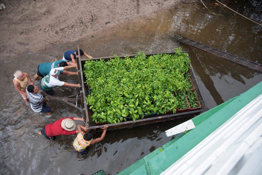 Comunitários transportam mudas de espécies nativas para barco. Foto: arquivo Saúde e Alegria