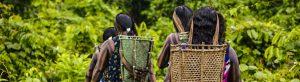 tradição e futuro da amazônia kayapó